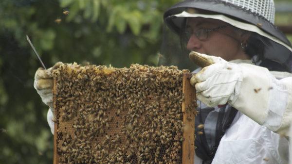 Arılar Yok Olursa