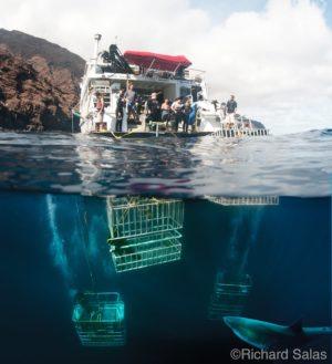 Köpekbalığı Kafes Dalışı