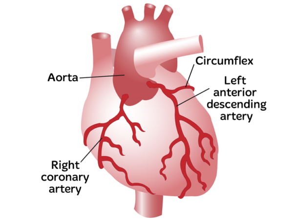 Koroner Arter Hastalığı