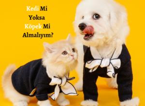 Kedi Mi Yoksa Köpek Mi Almalıyım?