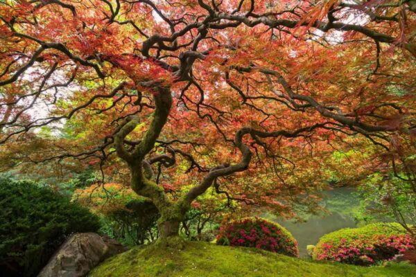 En İlginç Ağaç Türleri