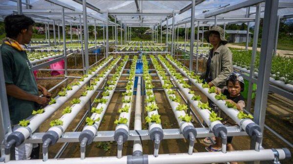 Topraksız Bitki Yetiştirme Teknikleri