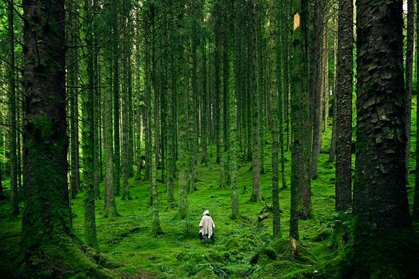 Orman Banyosu Nedir