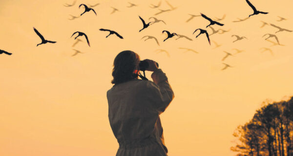 Kuş Gözlemciliği Nedir