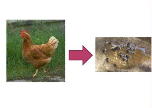 Hayvanlar Nasıl Boşaltım Yapar