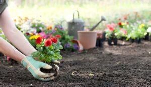 Fidan ve Çiçekler Ne Zaman Dikilir