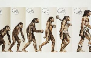Hayvanlar Nasıl Evrim Geçirir
